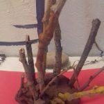 Cara's Tree